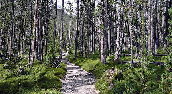 Parco Nazionale Svizzero, Grigioni, Svizzera. Autore e Copyright: Marco Ramerini